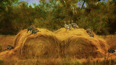 Photograph - Turkeys In The Straw - 2 by Nikolyn McDonald