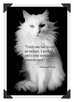 Cats Photograph - Turkish Angora Portrait With Anatole France Quote by Aurelio Zucco