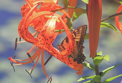 Photograph - Tiger Lily And Tiger Swallowtail by John Burk