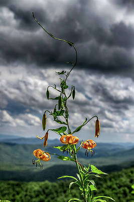 Photograph - Turks Cap Lily In The Blue Ridge Mountains by John Haldane
