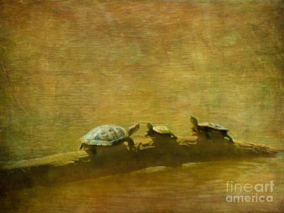 Photograph - Turtles On A Log by Judi Bagwell