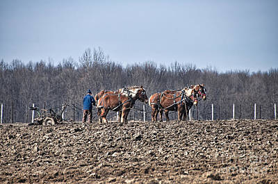 Amish Photograph - Turn The Earth by David Arment