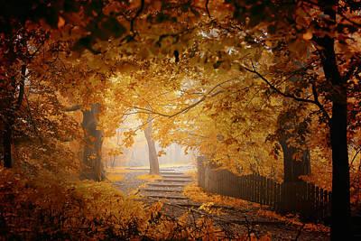 Step Photograph - Turn To Fall by Ildiko Neer