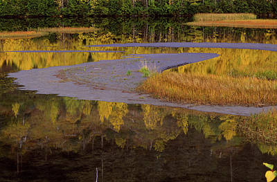 Photograph - Turnagain Marsh by Michael Balen