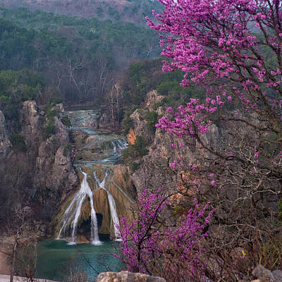 Photograph - Turner Falls Redbud by Katherine Worley