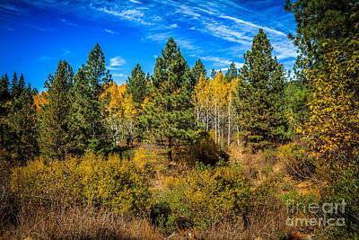 Photograph - Turning Aspen by Robert Bales