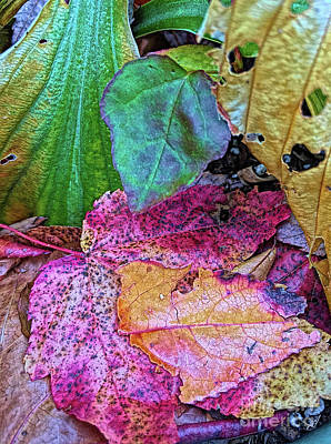 Photograph - Turning Leaves by Todd Breitling