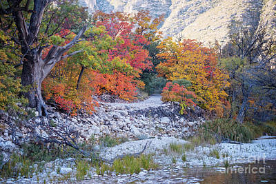 Photograph - Turning Maples Along Mckittrick Canyon Trail - Guadalupe Mountains National Park - West Texas by Silvio Ligutti
