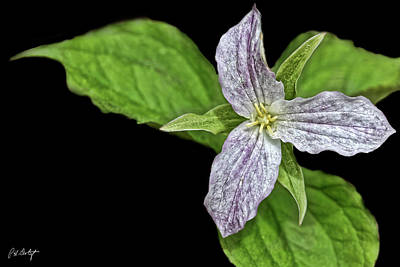 Trillium S Photograph - Once Was White by Phill Doherty