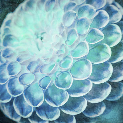 Digital Art - Turquoise Dahlia by Priya Ghose