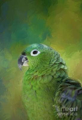 Turquoise-fronted Amazon Art Print by Eva Lechner