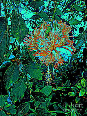 Photograph -  Turquoise Garden by Nancy Kane Chapman