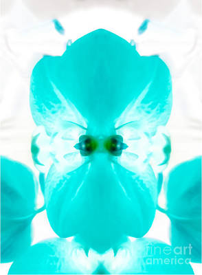 Orchid Photograph - Turquoise Orchid Twist by Heather Joyce Morrill