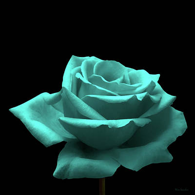 Single Rose Stem Photograph - Turquoise Rose by Wim Lanclus