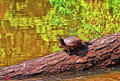 Photograph - Turtle 008 by George Bostian