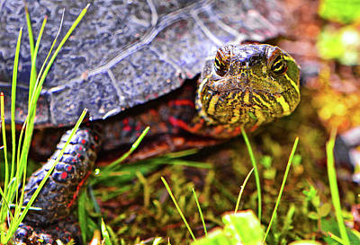 Photograph - Turtle 010 by George Bostian