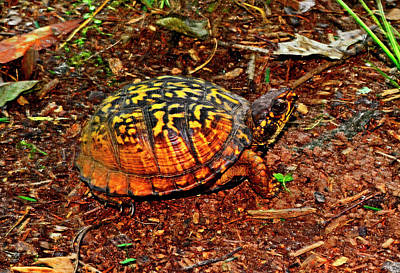 Photograph - Turtle 018 by George Bostian