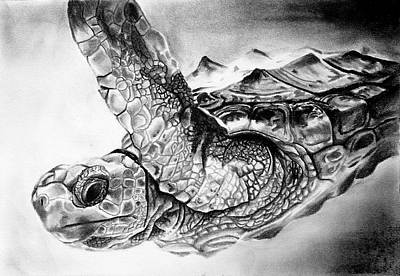 Drawing - Turtle by Alexis Kadonsky