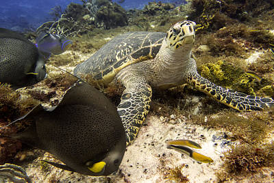 Underwater Photograph - Turtle And Friends by Jim Murphy