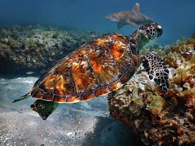Photograph - Turtle And Shark Swimming At Ocean Reef Park On Singer Island Florida by Justin Kelefas