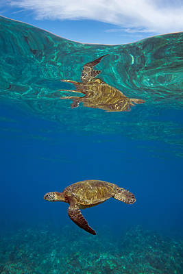 Turtle And Sky Art Print