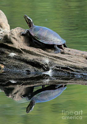 Photograph - Turtle And Terapin by Kenny Glotfelty