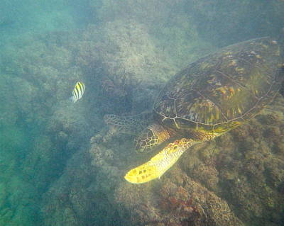 Photograph - Turtle And Yellow Fish by Erika Swartzkopf