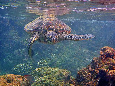Turtle Approaching Print by Bette Phelan