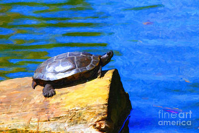 Turtle Basking In The Sun Art Print by Wingsdomain Art and Photography