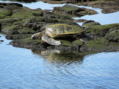 Photograph - Turtle By The Water by Pamela Walton