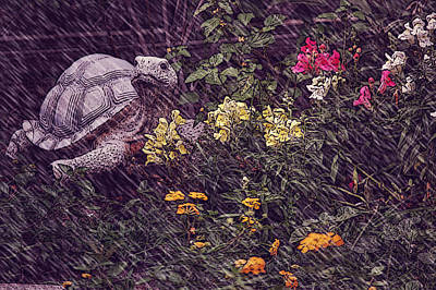 Photograph - Turtle Cover by Leticia Latocki