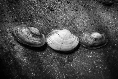 Photograph - Turtle Creek Treasure by Viviana  Nadowski