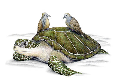 Ocean Turtle Drawing - Turtle Doves by Don McMahon