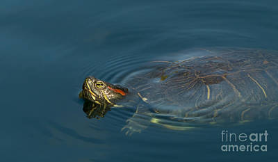Turtle Floating In Calm Waters Art Print