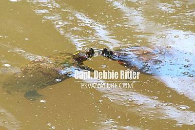 Photograph - Turtle Friends 9759 by Captain Debbie Ritter