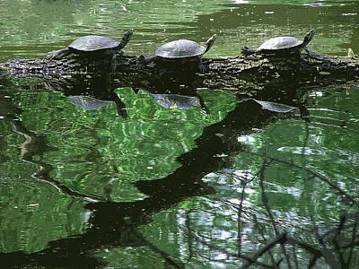 Photograph - Turtle Frieze by Stan  Magnan
