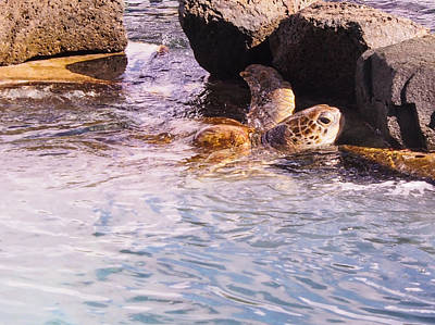 Photograph - Turtle Haven - St Thomas Us Virgin Islands by Karen Zuk Rosenblatt