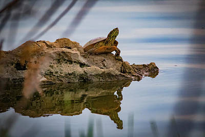 Photograph - Turtle Island by Ray Congrove