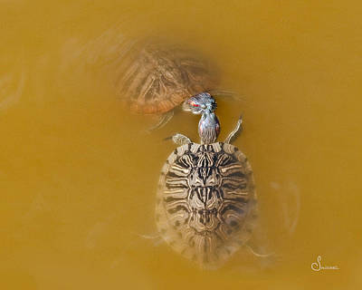 Pond Photograph - Turtle Kiss by Sally Mitchell