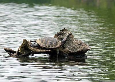 Photograph - Turtle Lounge by Bill Jordan