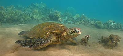 Hawaiian Green Sea Turtle Photograph - Turtle Magic by Brian Governale
