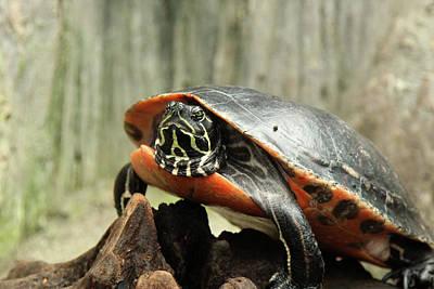 Turtle Neck Art Print