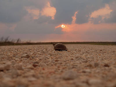 Photograph - Turtle Of The Apocolypse by Joshua House