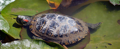 Photograph - Turtle On Lily Pads by Brent Dolliver