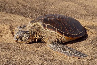 Photograph - Turtle On The Sand by Pamela Walton