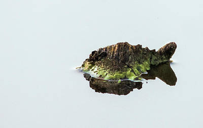 Photograph - Turtle Or Mountain  by Randy J Heath