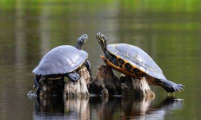 Photograph - Turtle Pas De Deux by Carla Parris