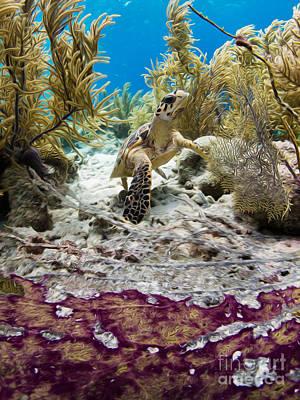Alejandro Gutierrez Photograph - Turtle Red Carpet by Athoyo