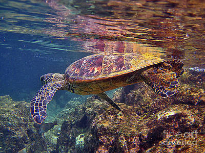 Hawaiian Green Sea Turtle Photograph - Turtle Reflections by Bette Phelan