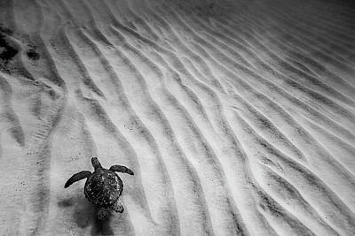 Ocean Turtle Photograph - Turtle Ridge by Sean Davey